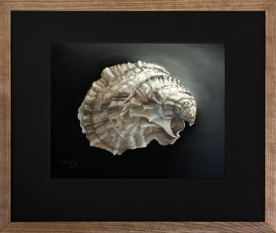 framed-oyster-shell-cotuit-ma_0
