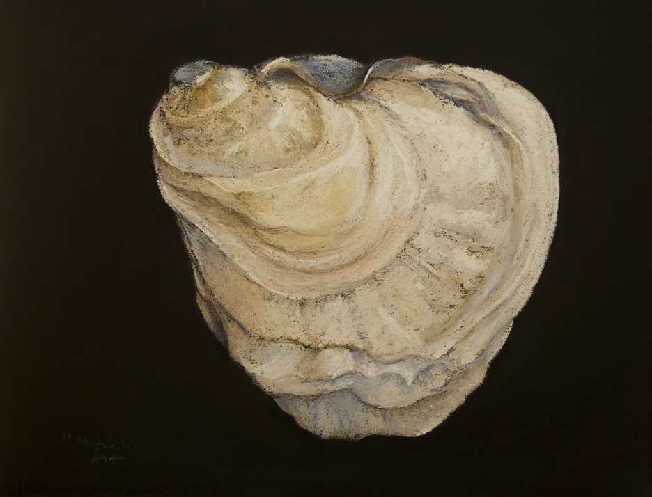 oyster-shell-2
