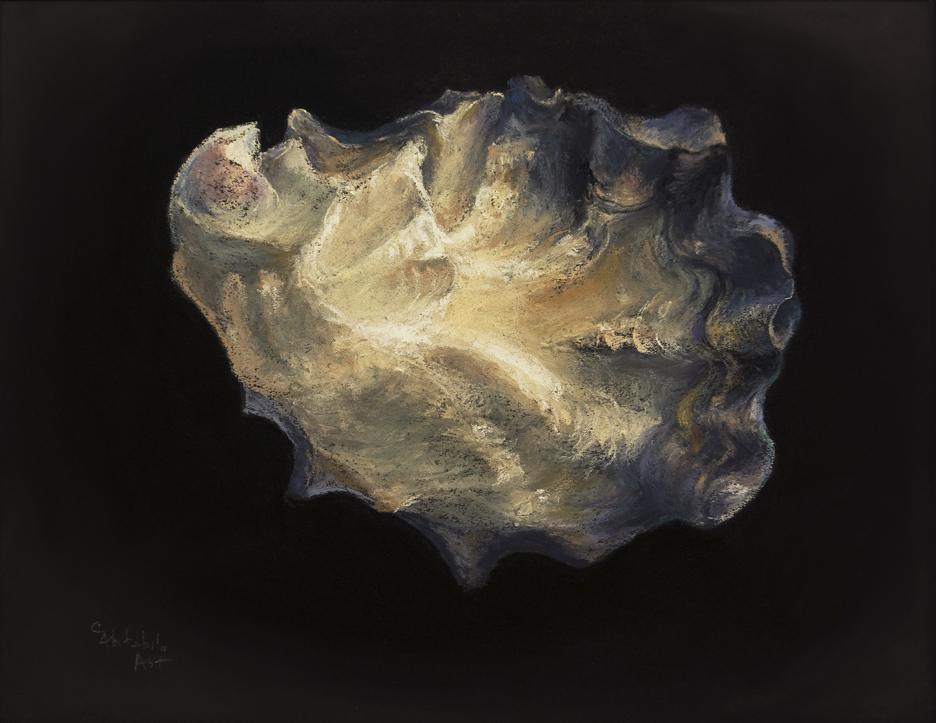 oyster-shell-6