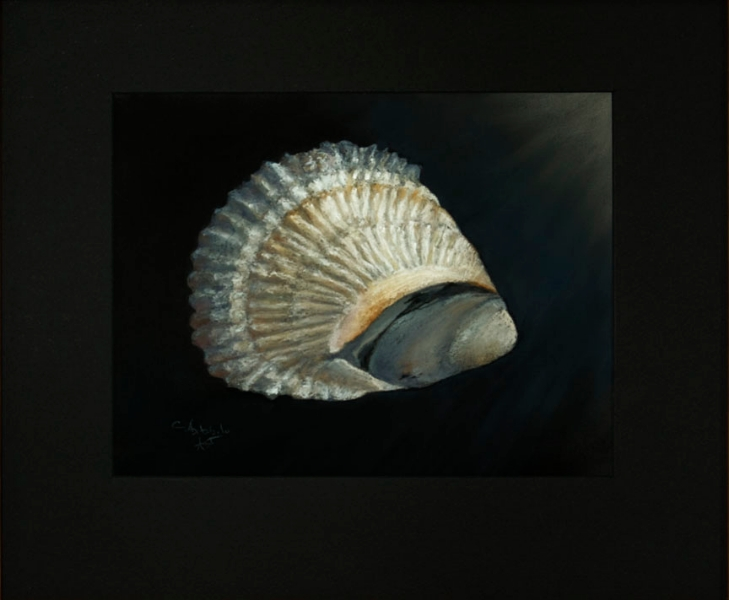oystershell-belonwithmussel