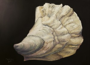 oyster-shell-1
